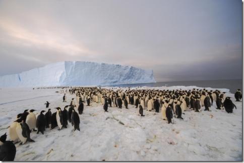 pinguin_01