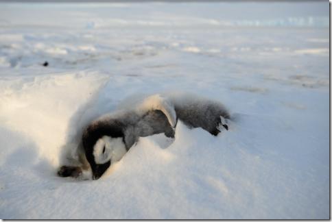 pinguin_03